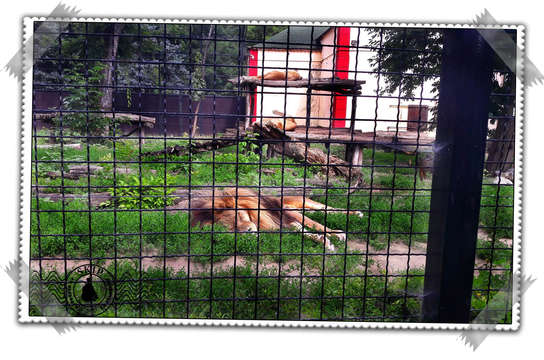 Palić Zoo Travel Serbia