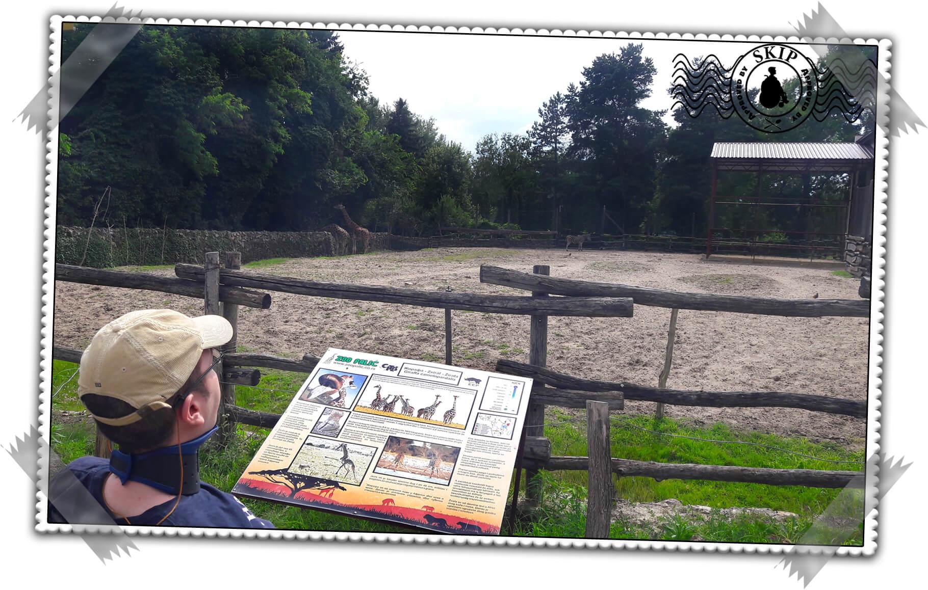 Palić Zoo Srbija Putovanja