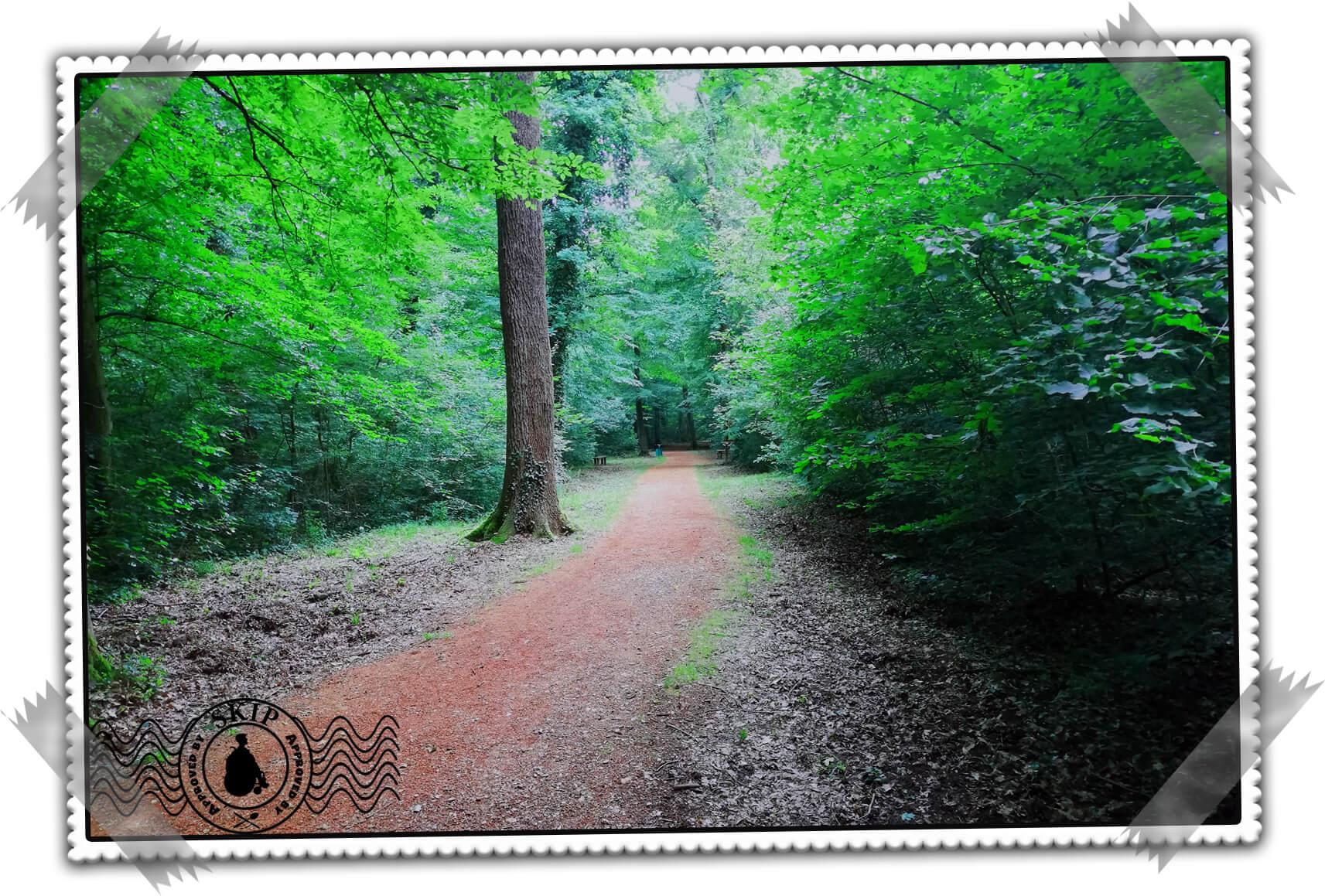 Srbija Bojčinska šuma putovanja